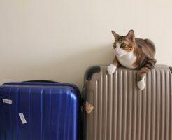 スーツケースが邪魔すぎる